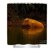 Ferrell Hog At Sunrise Shower Curtain