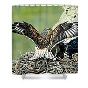 Ferruginous Hawk Male At Nest Shower Curtain