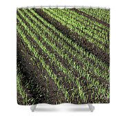 Fertile Farmland Shower Curtain