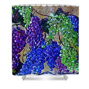 Festival Of Grapes Shower Curtain