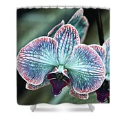 Festive Orchid Shower Curtain