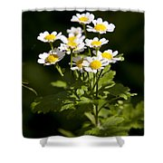 Feverfew Shower Curtain