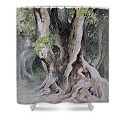Ficus Aurea Shower Curtain