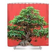 Ficus Bonsai Shower Curtain