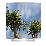 Ficus Leaves Against The Sky Shower Curtain