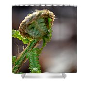 Fiddlehead 2 Shower Curtain