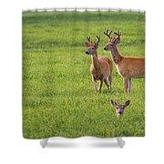 Field Deer Shower Curtain