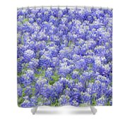 Field Of Bluebonnets Shower Curtain