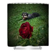 Field Of Clover Shower Curtain