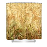Field Of Gold - 3 Shower Curtain