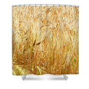 Field Of Gold 1 Shower Curtain