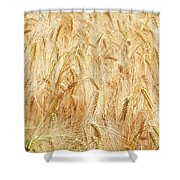Field Of Gold - 4 Shower Curtain