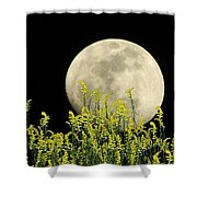 Field Of Gold By Moonlight Shower Curtain