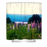 Field Of Lupines Shower Curtain