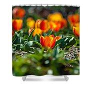 Field Of Orange Tulips Shower Curtain