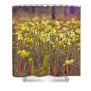 Field Of Pitcher Plants Shower Curtain