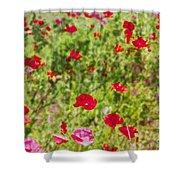 Field Of Poppies Digital Art Prints Shower Curtain
