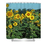 Field Of Smiley Faces Shower Curtain
