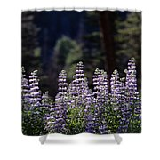 Field Of Summer Wildflowers Backlit Lupine  Shower Curtain