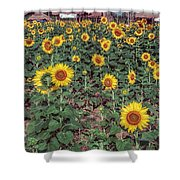 Field Of Sunflowers Shower Curtain by Adrian Evans