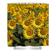 Field Of Sunflowers Shower Curtain