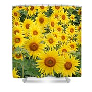 Field Of Sunflowers Helianthus Sp Shower Curtain