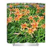 Field Of Tiger Lilies Shower Curtain