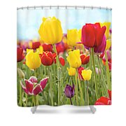 Field Of Tulip Flowers Against Blue Sky Shower Curtain