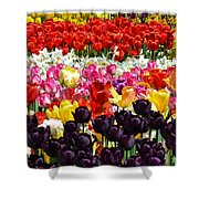 Field Of Tulips Ll Shower Curtain