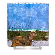 Field Spaniel Elegance Shower Curtain