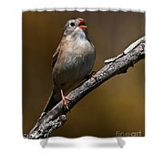 Field Sparrow Pictures 23 Shower Curtain