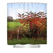 Field With Sumac In Autumn Shower Curtain