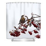 Fieldfare Shower Curtain
