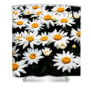 Fields Of Daisies Shower Curtain