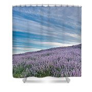 Fields Of Lupine 1 Shower Curtain