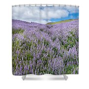 Fields Of Lupine 3 Shower Curtain