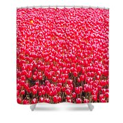 Fields Of Tulips Alkmaar Vicinity Shower Curtain