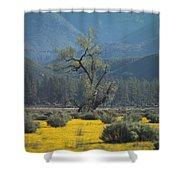 Fields Of Yellow Foxglove Shower Curtain