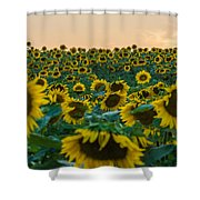 Fields Of Yellow  Shower Curtain