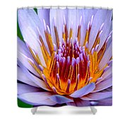 Fiery Eloquence Shower Curtain
