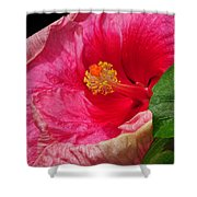 Fiery Hibiscus Shower Curtain