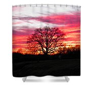Fiery Oak 2 Shower Curtain