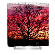 Fiery Oak Shower Curtain