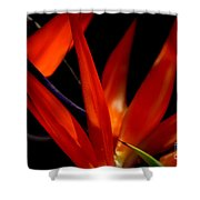 Fiery Red Bird Of Paradise Shower Curtain