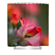 Fiery Roses Shower Curtain