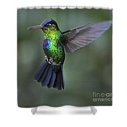 Fiery-throated Hummingbird..  Shower Curtain