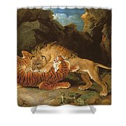Fight Between A Lion And A Tiger, 1797 Shower Curtain by James Ward