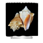 Fighting Conch Seashells Shower Curtain
