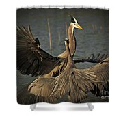 Fighting Great Blue Herons Shower Curtain