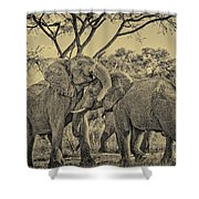 fighting male African elephants Shower Curtain